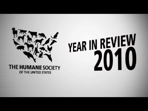the year 2010 in review