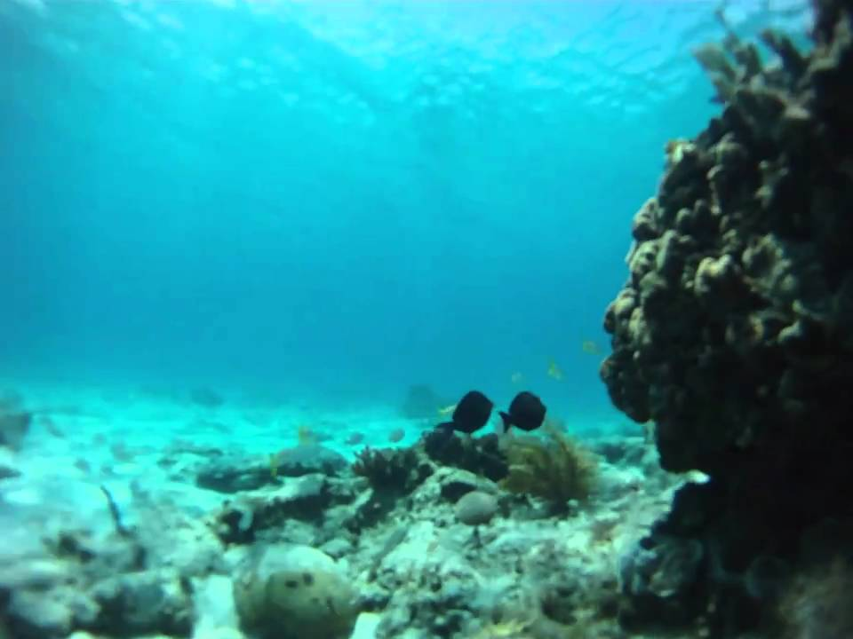 the reef grand cayman reviews
